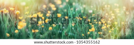 Buttercup flower in grass - beautiful spring flower in meadow #1054355162
