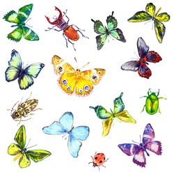 Butterflies and Bugs, Pattern Hand painted watercolor pattern white isolated