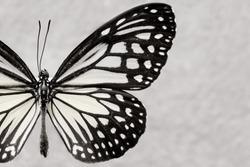 Butterflies and colorful butterflies