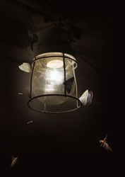 Butterflies and old lamp