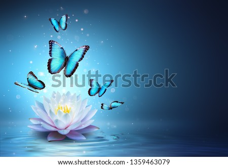 Butterflies And Waterlily In Water - Beauty Miracle - illustration