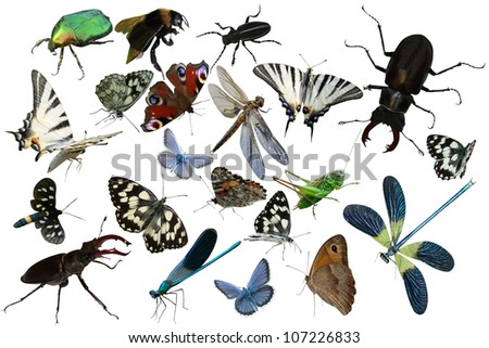 Butterflies, dragonfly, grasshopper, other insects isolated a white background beetles, spiders, insects, common stag beetle