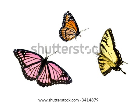 butterflies isolated on white