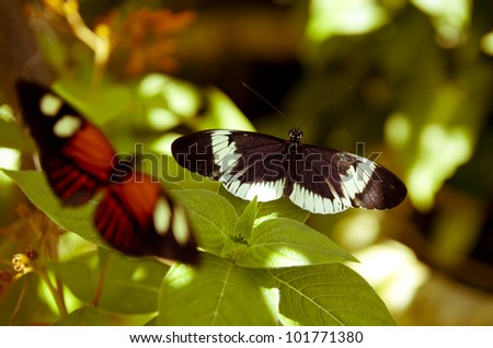Butterflies on a Sunny day - stock photo