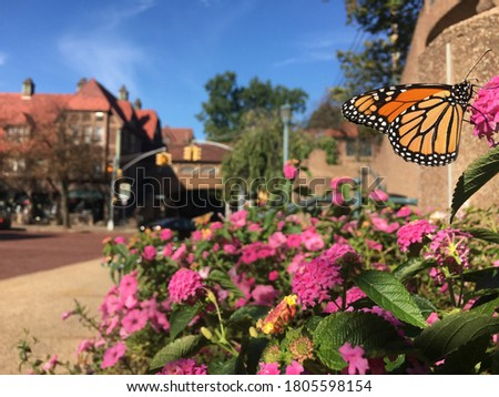 Butterflies on flowers in cobblestone street in Forest Hills Gardens- Station Square Forest Hills NY, Queens Stock fotó ©