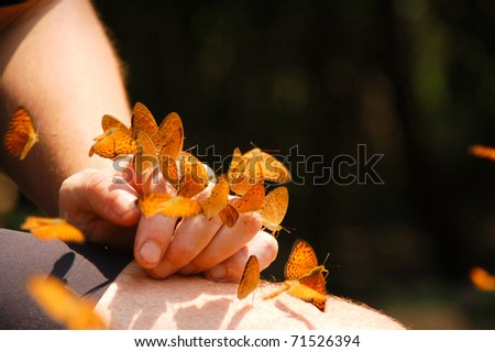Butterflies on hand