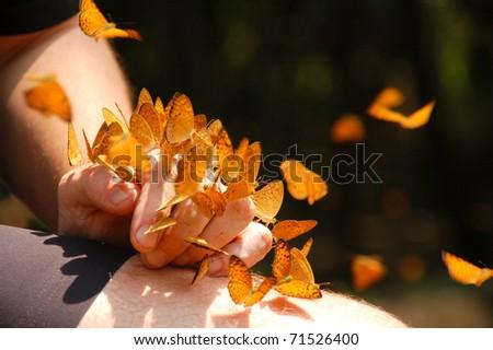 Butterflies on hand