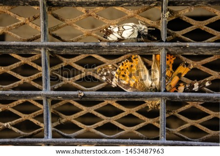 Butterflies on protective grille cooling radiator. Selective focus. Protective grille in front of a car engine cooling radiator. Close-up of butterfly. Place for text. #1453487963