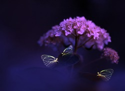 Butterflies on violet flower hydragea. Fantastic image, beautiful abstract image macro close up. Wallpaper, background, postcard, etc.