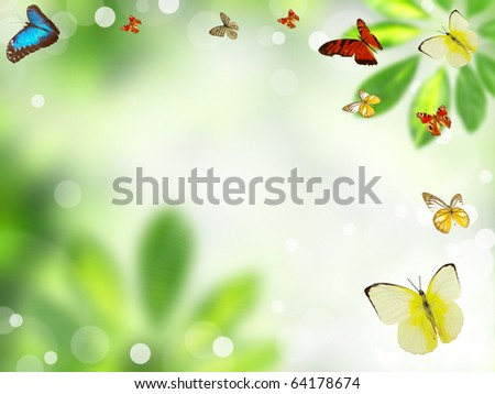 Butterflies with green blur background