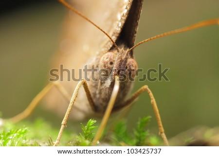 butterfly #103425737