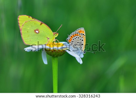 Butterfly #328316243