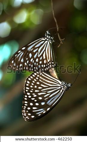 Butterfly_4131