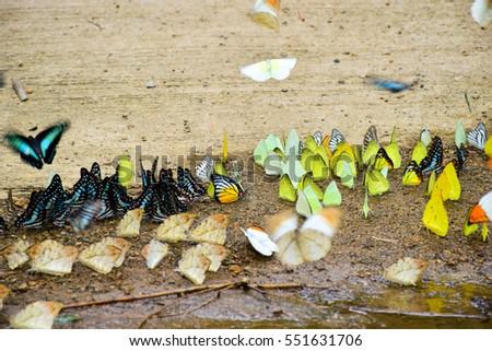 Butterfly #551631706