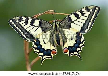 Butterfly #572417176