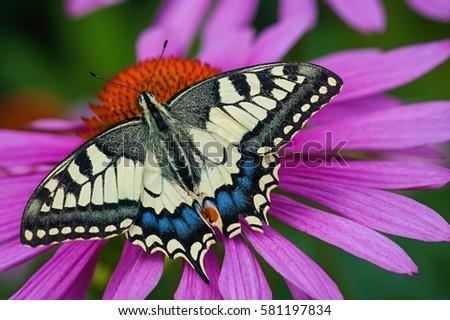 Butterfly #581197834