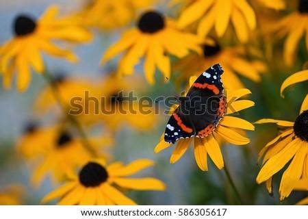 Butterfly #586305617