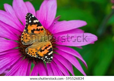 Butterfly #595526834