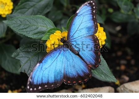 Butterfly #602402048