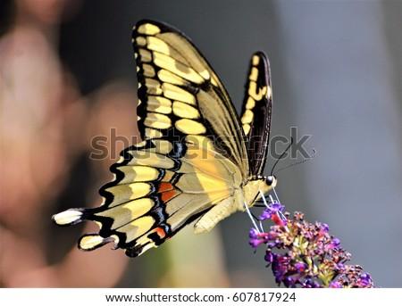 Butterfly #607817924