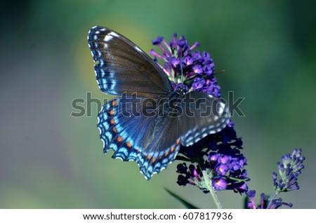 Butterfly #607817936