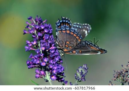 Butterfly #607817966