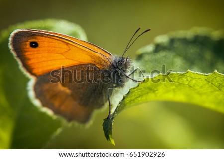 Butterfly #651902926