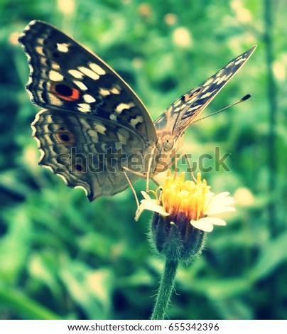 butterfly  #655342396