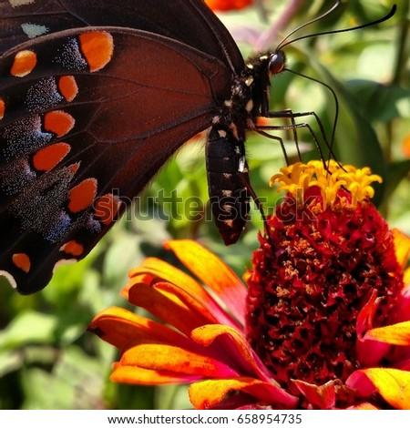 Butterfly #658954735