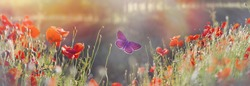 Butterfly and field with poppy flowers - beautiful nature, beauty in nature