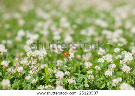 butterfly and flowers in sunny day