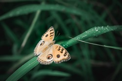 Butterfly and fresh green grass with dew drops.Nature background concept.