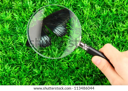 butterfly and magnifying glass in hand on green grass