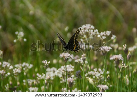 Butterfly and wildflowers in Enchanted Rock State Natural Area, Texas, United States