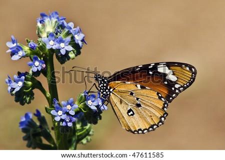 Butterfly at Kirstenbosch National Botanical Gardens, Cape Town, South Africa