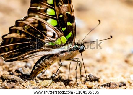 Butterfly at Pang Sida National Park, Thailand #1104535385