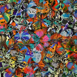 Butterfly ,beautiful pattern abstract background texture made from colorful butterfly
