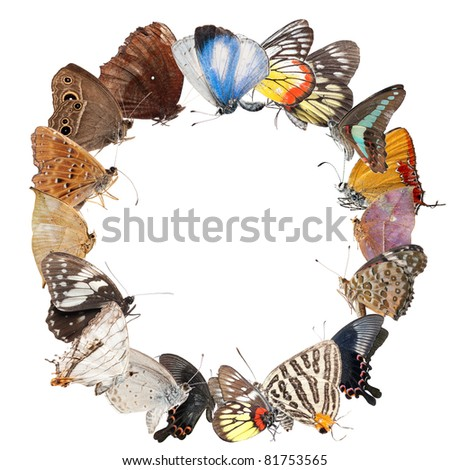 butterfly blank frame background isolated