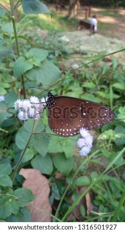 Butterfly Butterfly Butterfly #1316501927