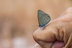 Butterfly, butterfly Macro, butterflies on the fingers-the eyes focus.