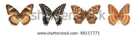 butterfly collection set isolated