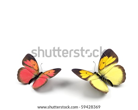 Butterfly - 3d render illustration on white background.