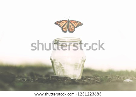 butterfly flies away fast from the glass jar in which she was trapped