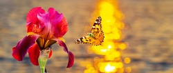 Butterfly flies to red flower on river background during sunset