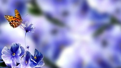 butterfly flowers stock image.Attractive nature image of blue flowers having blue blurry background.An insect sitting on flowers with blue background. blue blurry with cute flowers. Texture background