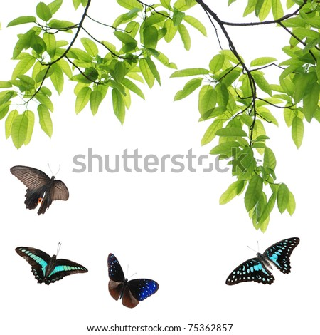 butterfly flying green leaf nature background