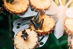 Butterfly in natural environment. Closeup, macro shot. Beautiful colorful insect, entomology concept