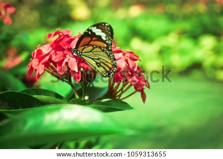 butterfly in the garden outdoor background