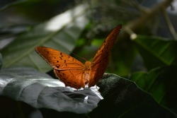 Butterfly in the Melbourne Zoo