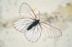 butterfly in the water, garden